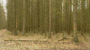 warmia mazury tv l jak las puszcza bialowieska