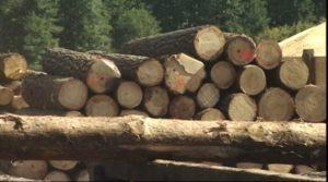 drewno-paliwo, budulec, zrodlo ciepla