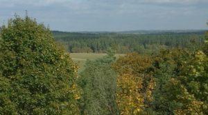 l jak las lasów przybywa