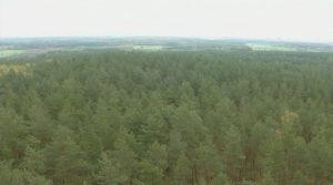 las bezpieczeństwo w puszczy